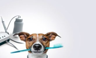 Чистка зубов ультразвуком собаке